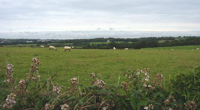Grazing sheep near Nant