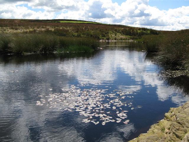 Lough near Crawberry Hill (2)