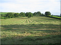 ST8619 : Freshly mown field by Phil Williams