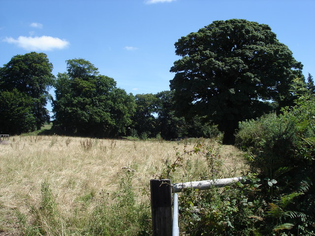 Oak trees and field