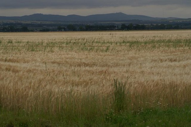 Barley at Powgavie