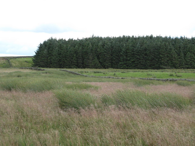 Glenhill Plantation