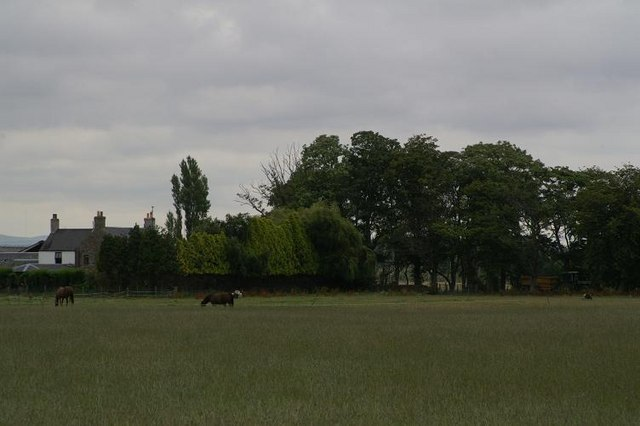 Fields at the Leys