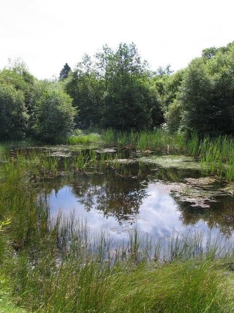 Pond in the Taf Fechan forest