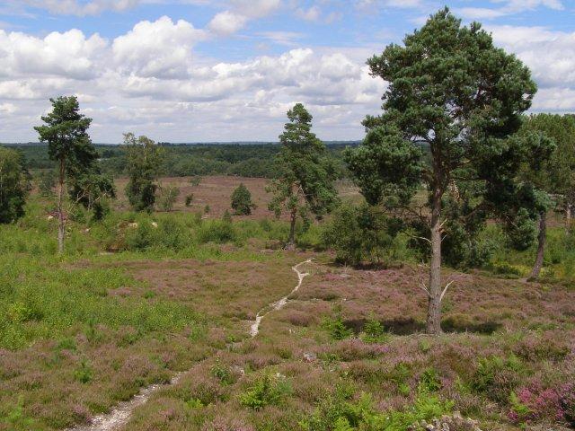 Restored heathland, East Ramsdown