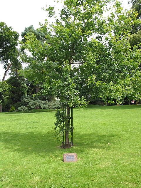 Korean War Memorial - Oak Tree