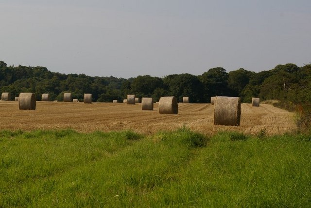Straw bales stacks in field