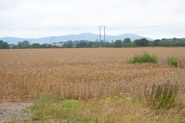 Wheat Field near Manor Farm