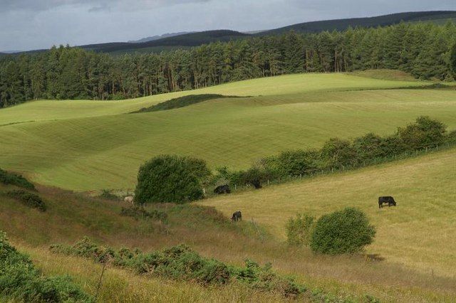 Farmland and forestry at Bamff