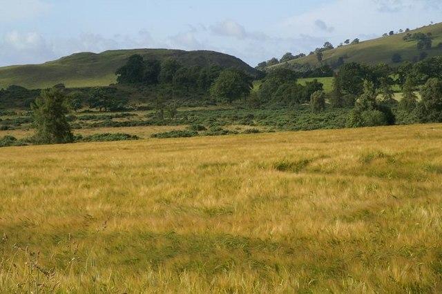 Farmland at the Craigs