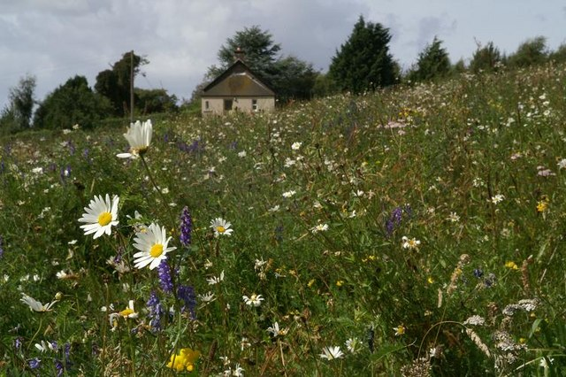 Amazing wild flower meadow at Shanzie
