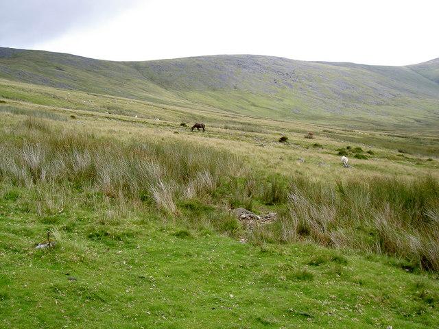 Ponies in the valley below Bera Bach