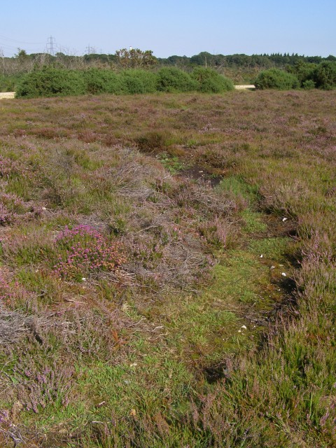 Bowl barrow ditch alongside the track to King's Copse Inclosure, New Forest