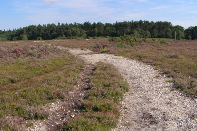 Heathland path, near King's Copse Inclosure, New Forest