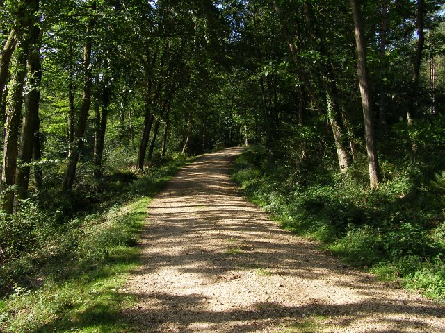 Gravel track in King's Copse Inclosure, New Forest