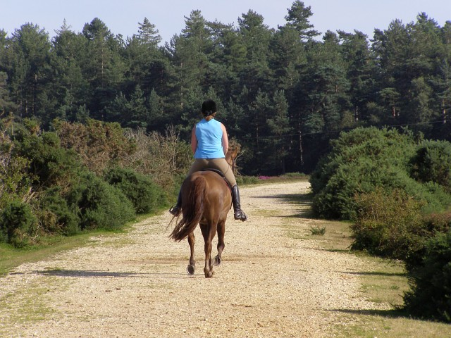Horse and rider approaching King's Copse Inclosure, New Forest