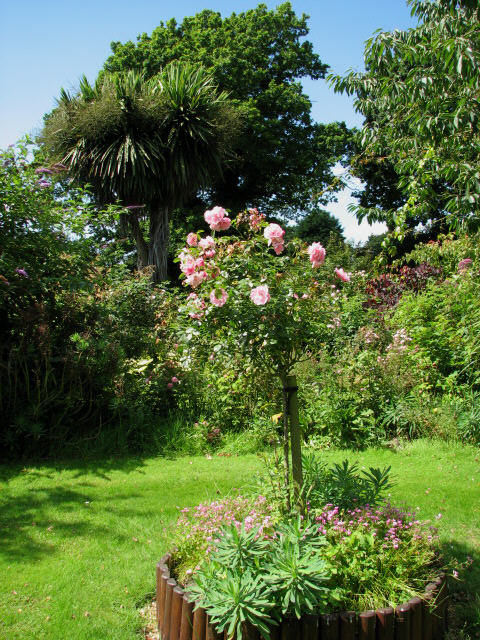 Peter Beales Classic Roses