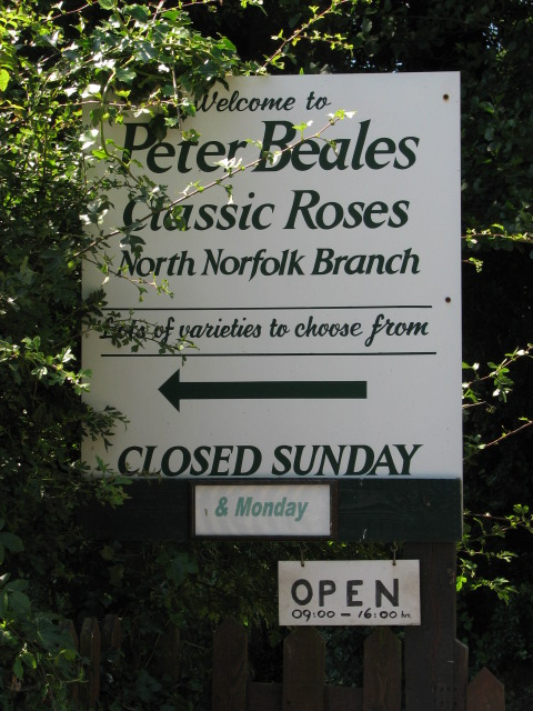 Peter Beales Classic Roses