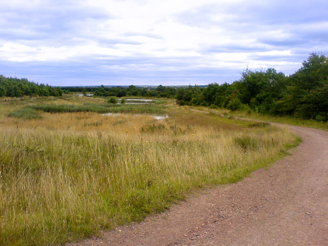 Ponds on reclaimed land