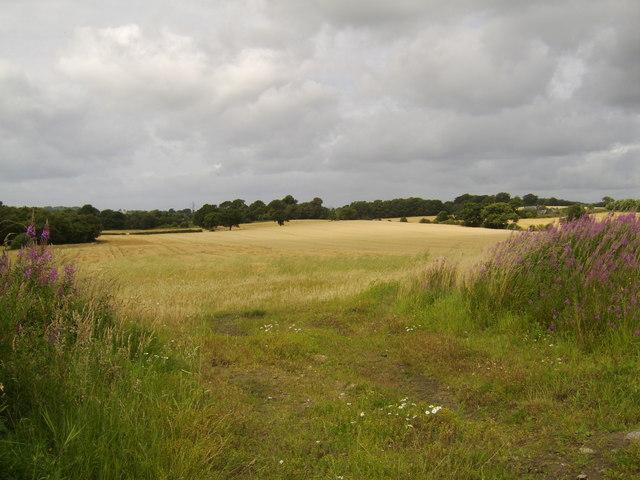 Crop field, by Erskine