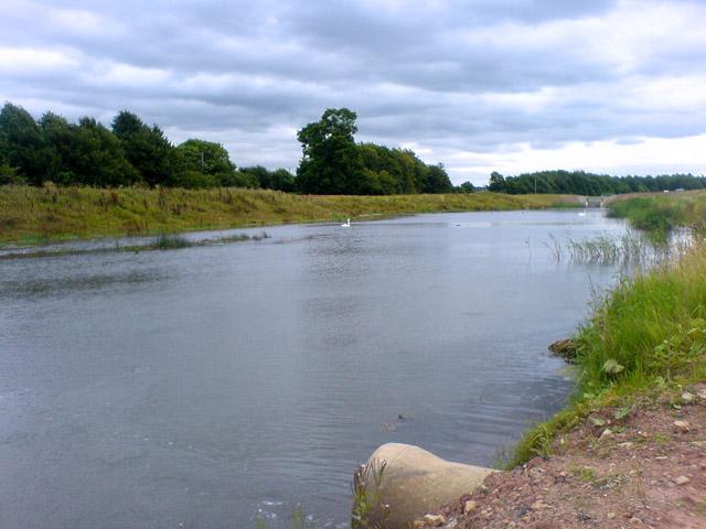 Swans on new pond