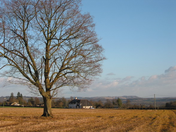 Chapel Knapp and Roundway Down
