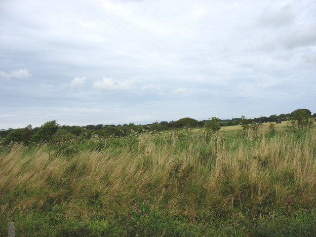 A glimpse of a hay field and woodland over the top of the dyke