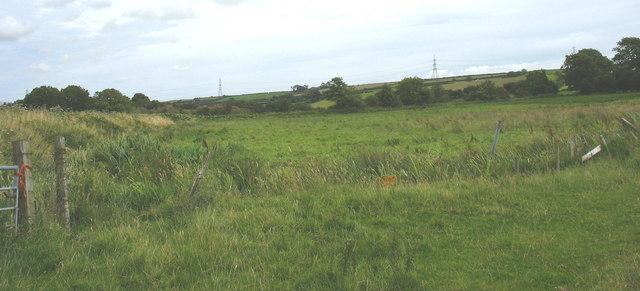 The NE corner of the marsh