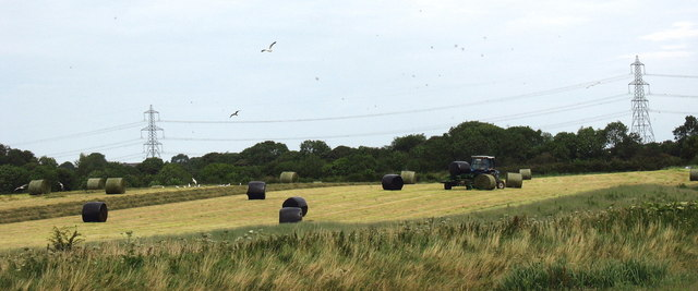 Hay making  on land fringing the marsh