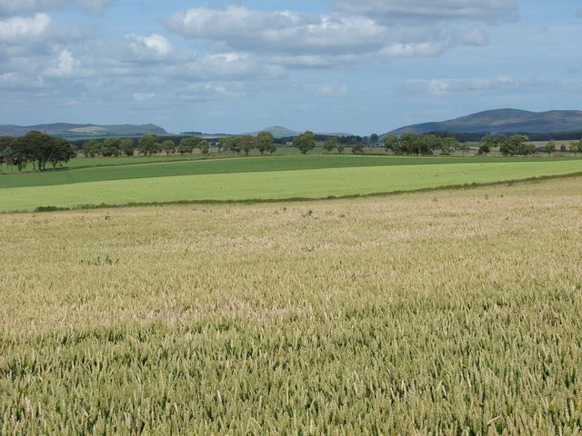 Wheat-field at Swaites Farm