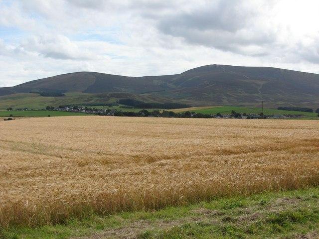 Ripening barley by Covington
