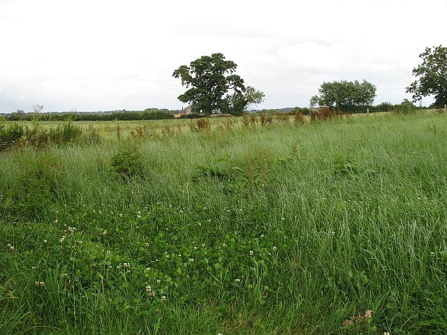 Hay meadow near Polemere