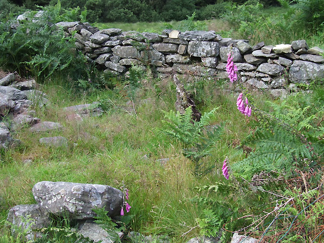 Maes-y-Betws Ruin (detail), Cwm Doethie, Ceredigion