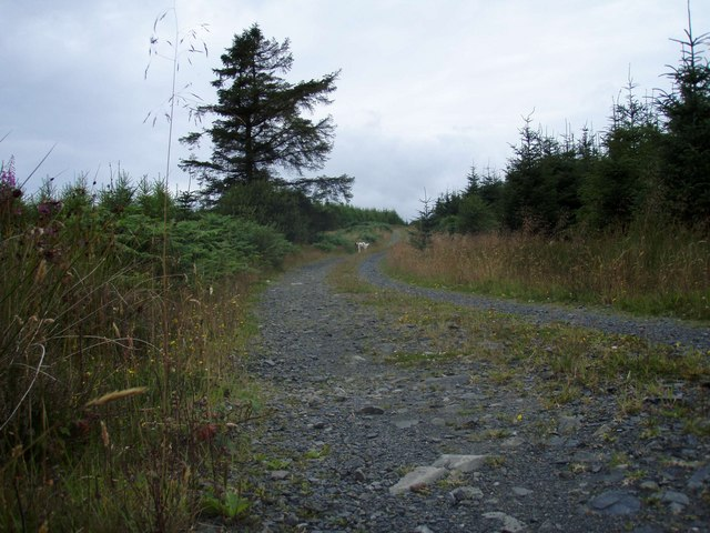 Crotteagh Hill