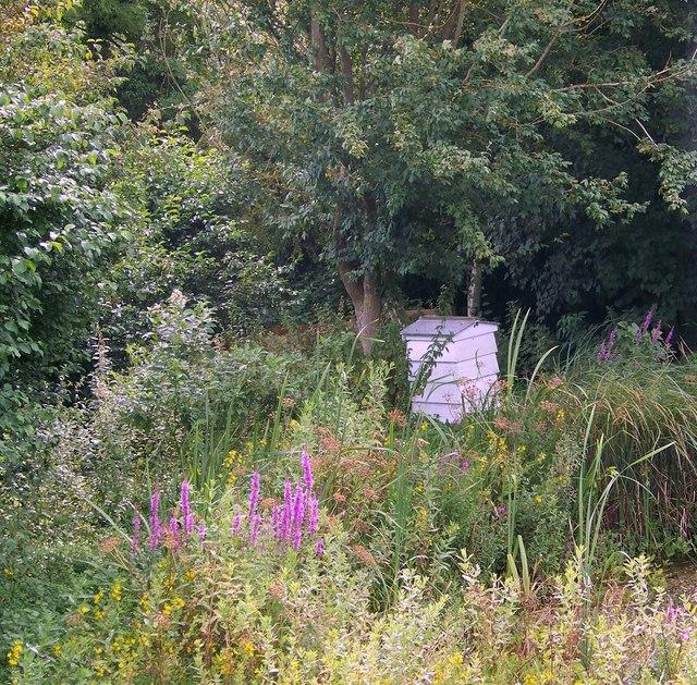 Garden at Salisbury Hospice