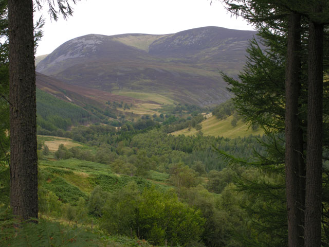 View towards Glen Tilt from Blairbuachdar Wood