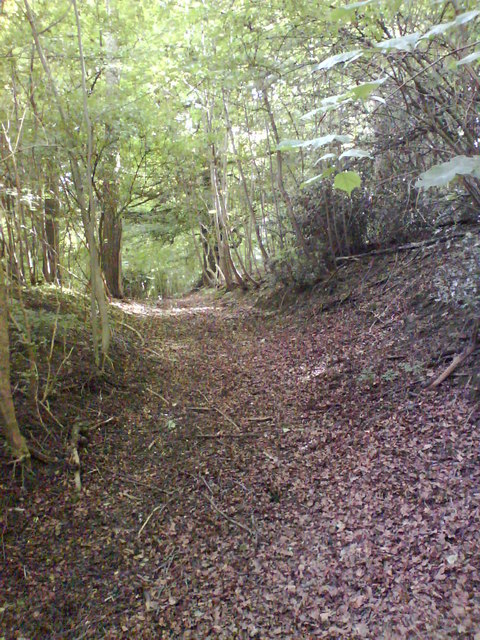Trackway Through the Woods