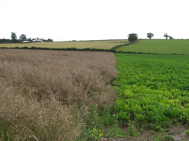 A mix of crops