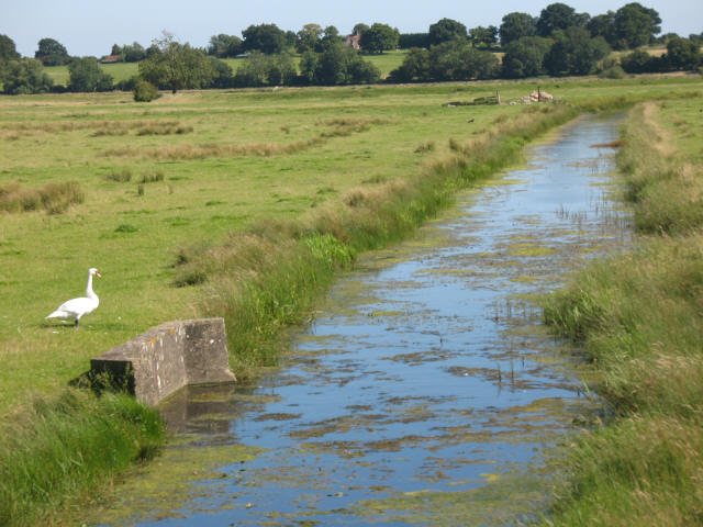 Drainage channel with swan