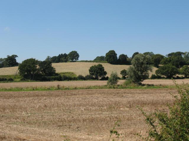 Fields near Rolvenden