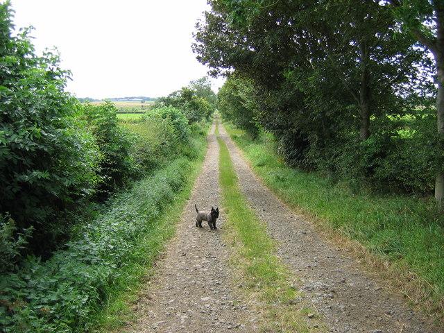 Footpath opposite Broadlaw Farm