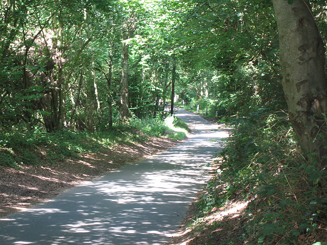 Attractive road through woodland near Selbrigg Cottage