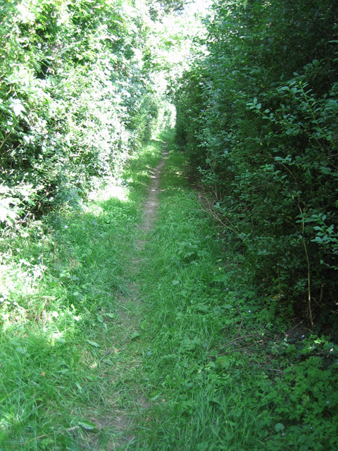 Along between the hedges of Hurdle Lane