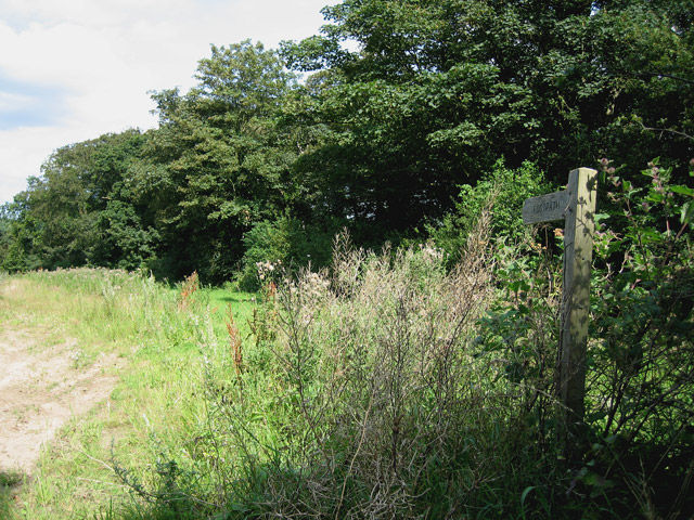 Footpath beside Eighteen Acre Plantation