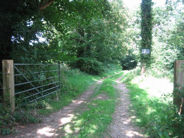 Track into Eighteen Acre Plantation