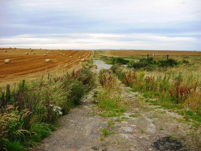 Crops on Ingoe Moor