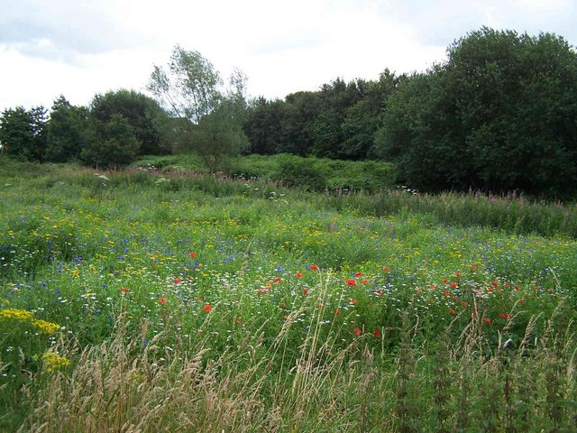 Wild Flowers Near Heath Hayes