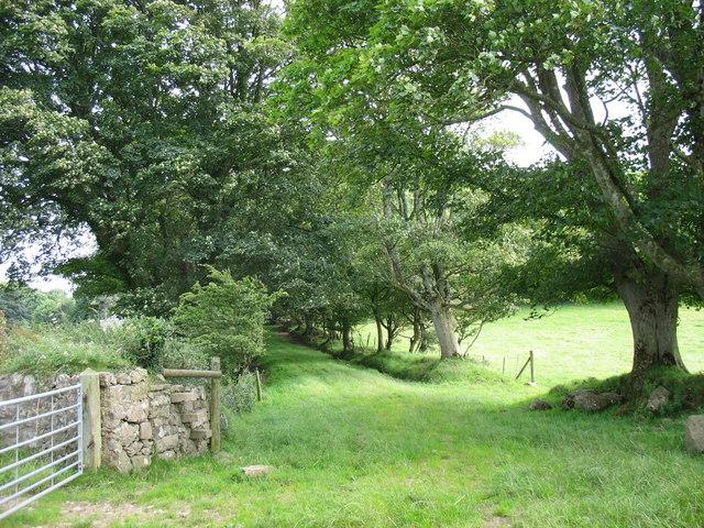 Farm lane at the back of Plas Llanddyfnan