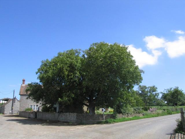 A pleasant farmhouse