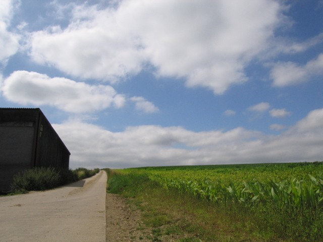 A track in farmland